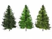 Spruce Tree Isolated on White — Stock Photo