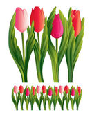 Tulips vector — Stock Vector