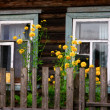 The windows of rural house — Stock Photo #68218585