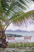 Caribbean, palm tree and pink chair — Stock Photo