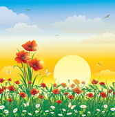 Flowery meadow with poppies — Stock Vector