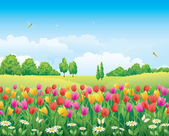 Meadow with tulips and camomiles — Stok Vektör