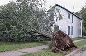 Uprooted After Storm — Stock Photo