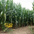 Corn Maze Entrance — Stock Photo #67747911