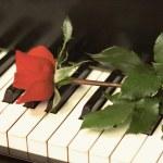 Retro Rose on Piano Keys — Stock Photo #67930669