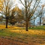 Golden Autumn Day in Cemetery — Stock Photo #68298797