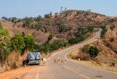 Сow on the road — Stock Photo