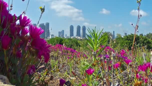 Tel Aviv view of the city — Vidéo