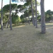 Walk along a deserted park on a sunny day with pine trees and stone benches — Stock Video #67425743