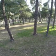Circular motion around the park with trees on a sunny day — Stock Video #67426589