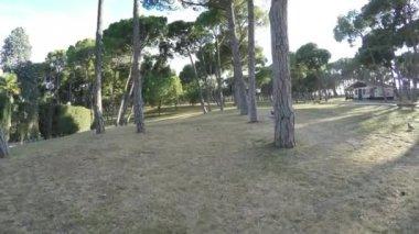 在晴天的松树和石凳上沿着废弃的公园 — 图库视频影像