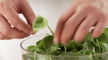 Picking spinach leaves from stalks — Stock Video