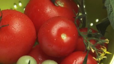 Ripe & unripe tomatoes — Stock Video