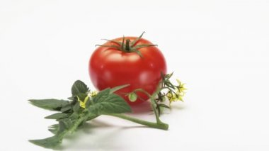 Rotating tomato with leaves — Stock Video
