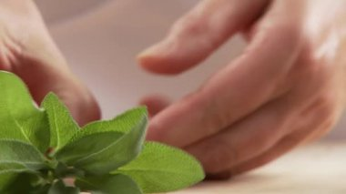 Picking sage leaves from stems — Stock Video