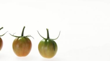 Ripe and unripe tomatoes — Stock Video
