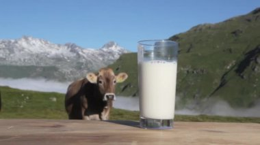A glass of milk and a cow — Stock Video