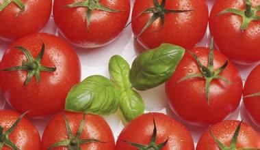Tomaten met basilicum — Stockvideo