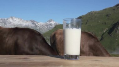 A glass of milk and cows — Stock Video