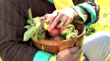 Person holding a basket of apples — Stock Video