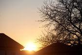 Ağaç ile büyülü gündoğumu — Stok fotoğraf