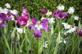 Tiempo de primavera — Foto de Stock