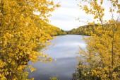 Autumn in Alaska - Aspen & Lake — Stock Photo