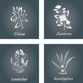Collection of Herbs . Labels for Essential Oils and Natural Supplements. Lavender, Eucalyptus, Jasmine, Clove — Stock Vector