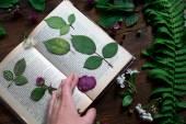 Floral mix van verse cuted, gedrukt en gedroogd voorjaar bloemen en bladeren alle ingericht in rustieke stijl op donkere hout achtergrond met vrouwelijke hand regelen alle Softfocus overhead-hoek schot — Stockfoto