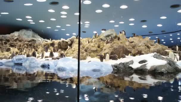 El pingüino en el zoológico — Vídeo de stock