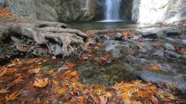 Millomeri waterfall  and stream in the forest at Troodos mountains — Stock Video