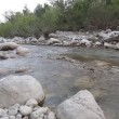Mountain river flowing through the green forest — Stock Video #74229523