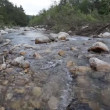 Mountain river flowing through the green forest — Stock Video #74232177