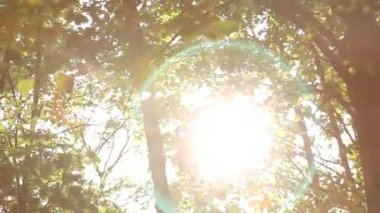 Alba nella foresta di estate della sorgente — Video Stock