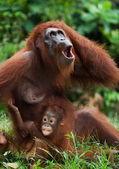 Portrait of monkeys  close up — Stock Photo