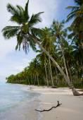 The beach of a tropical island — Stock Photo