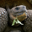Tortoise with green plant — Stock Photo #66956943
