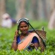 Woman on tea plantation — Stock Photo #68225895