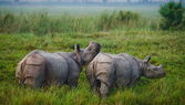 Two rhinos outdoors — Stock Photo