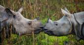 Portrait of two rhinos — Stock Photo