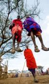 Masai warriors traditional jumps — Stock Photo