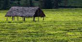 Hut in green meadow — Stock Photo