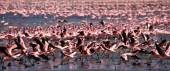 Pink flamingos outdoors — Stock Photo