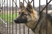 Dog over the fence — Stock Photo