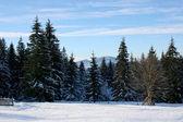 Winter bomen in bergen bedekt met verse sneeuw — Foto de Stock