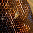 One bee works on honeycomb — Stock Photo #71510581