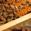 Bees inside a beehive with the queen bee in the middle — Stock Photo #71510627