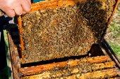 Bees works on honeycomb. — Fotografia Stock