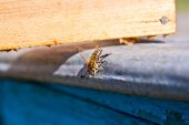 One bee on the beehive — Fotografia Stock