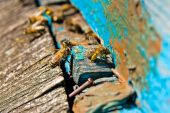 Busy bees, close up view of the working bees.  — Fotografia Stock